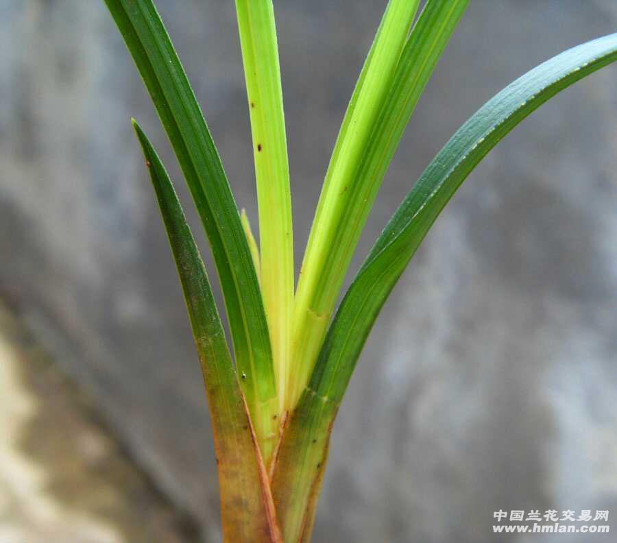 植物变形设计图片