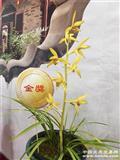 金色阳春 H2-130 引种苗