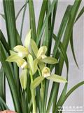 春剑翠微素,8苗2花。