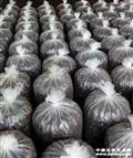 """代售""""铭轩""""牌兰花公用植料:1袋7公斤左右—节前促销"""
