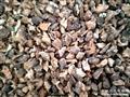 0起拍栎树皮(栓树皮)颗粒3--4mm