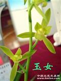 〔584〕白水晶斑素花【玉女】