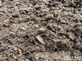 包邮 丹麦品式托普兰花专用草炭 (金森林)